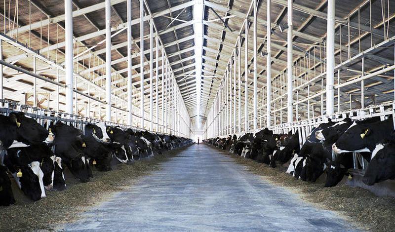 Milch ist Big Business. Hinter dem unschuldig anmutenden Lebensmittel verbirgt sich ein milliardenschweres Industriegeflecht