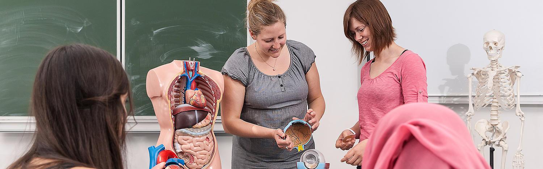 Master Management im Gesundheitswesen: Ein (Schüler-) Torso wird von zwei Studierenden zusammengesetzt.