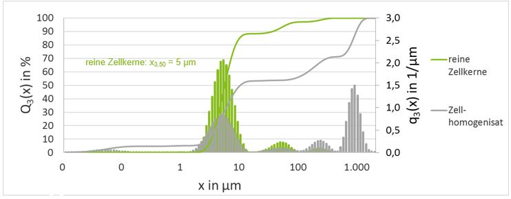 Partikelgrößenverteilung Zellkerne und Zellhomogenisat